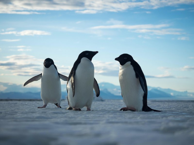 Антарктида животные и растения картинки