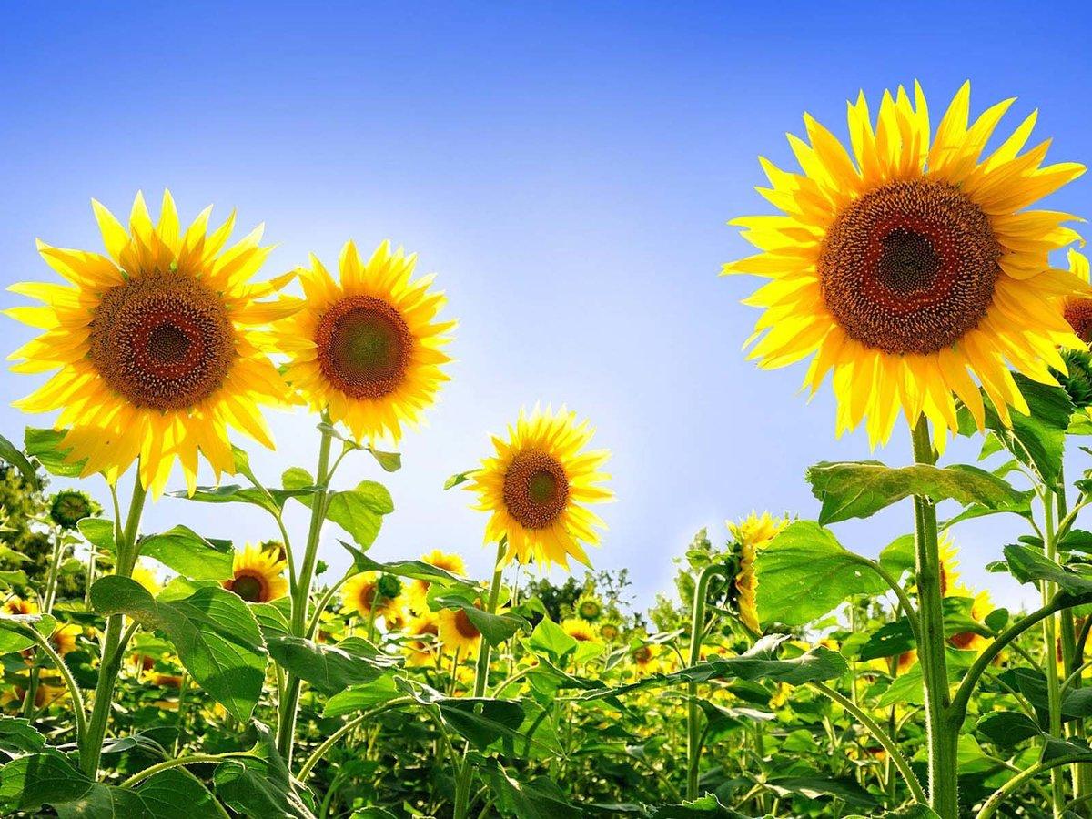 Открытки природа цветы и солнце, пасхой