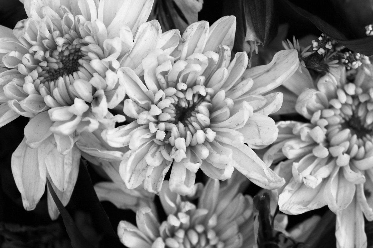 красивые черно белые картинки цветы есть человек