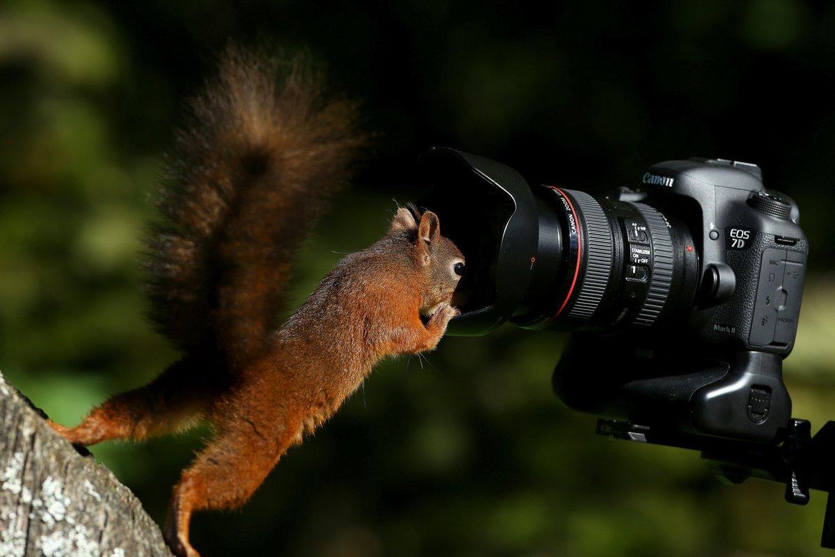 Фотоаппарат картинки смешные, деньги