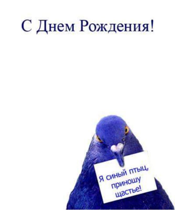 Открытка с голубем с днем рождения