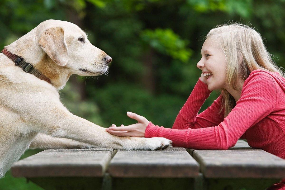 Говорящие картинки с животными