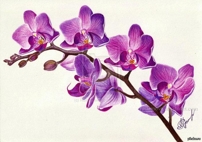 колесо, рисунки красивых орхидей тому закиров регулярно