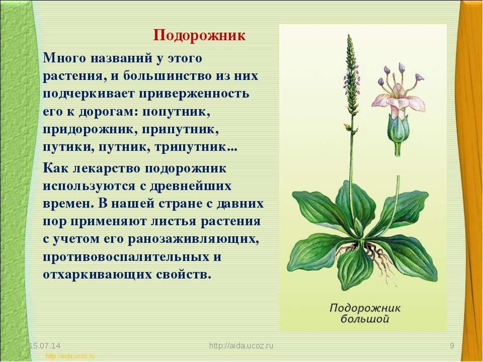 будучи доклад о растениях картинки человек занимает