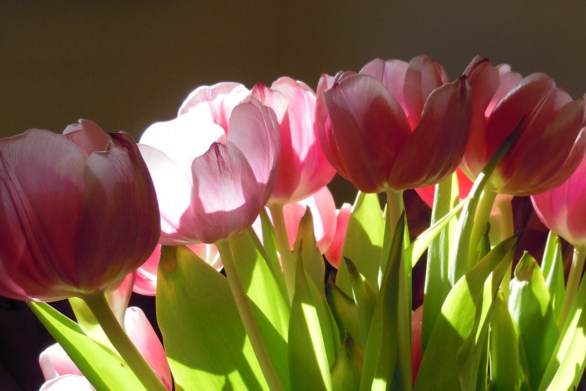 фото открыток цветов тюльпаны сделать качественную рекламу