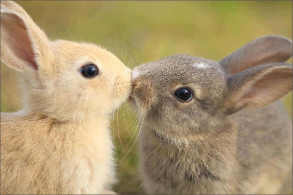 Меня, картинки любовь животных