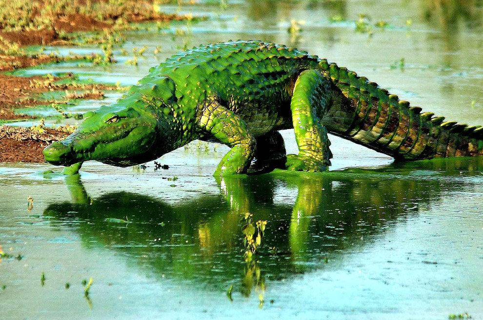 Картинка прикол крокодил, 14-летием