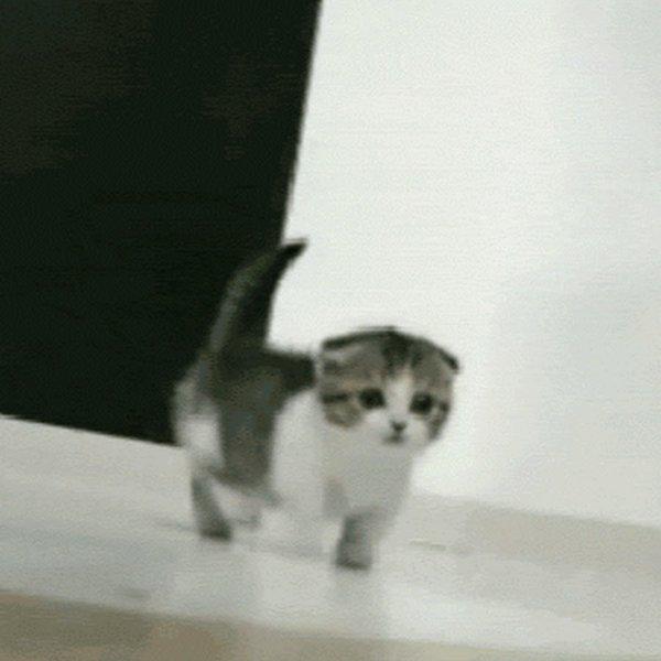 Смешные движущиеся картинки про котов
