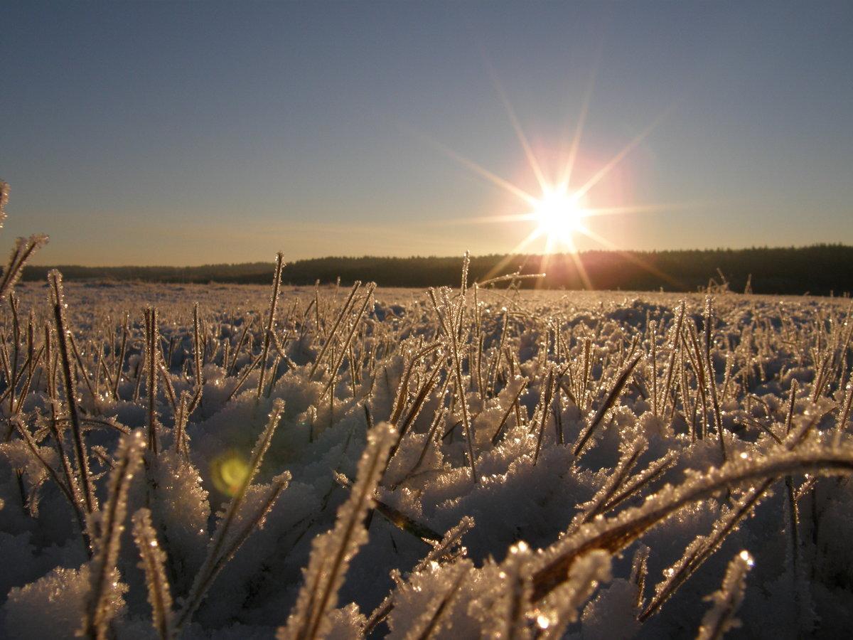 поля зимой фотографии которые