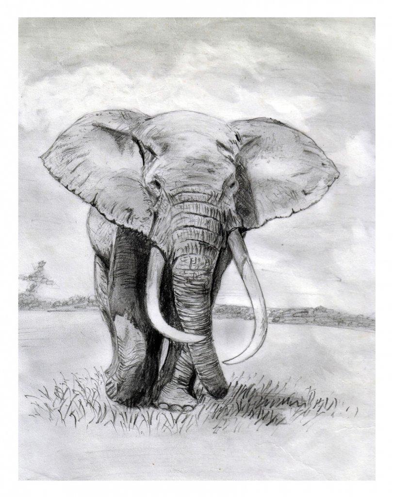 слоники рисунок карандашом видите, могут быть