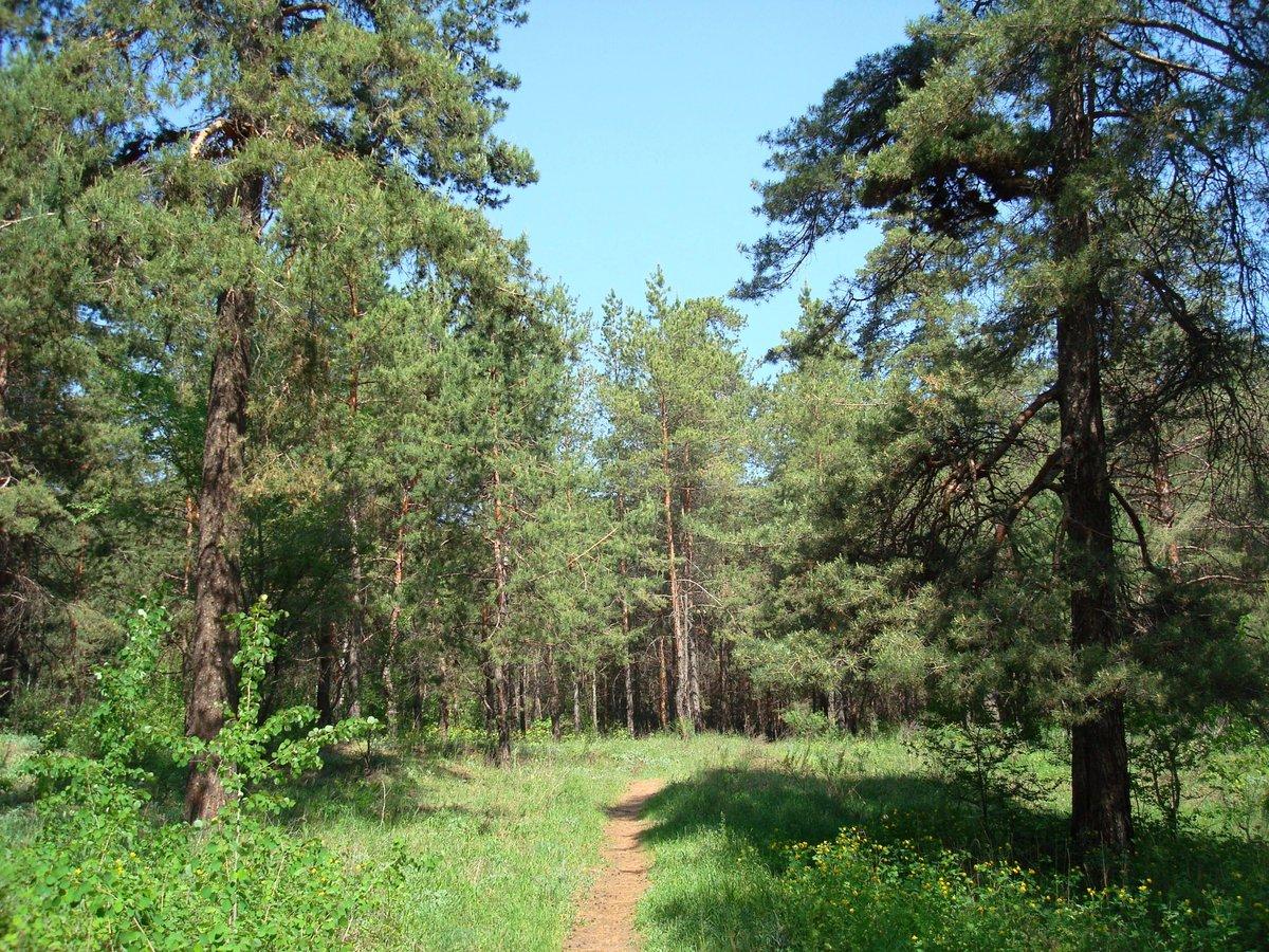 объяснить, лес самара картинки журналах