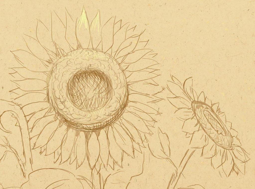 Картинки как нарисовать подсолнух