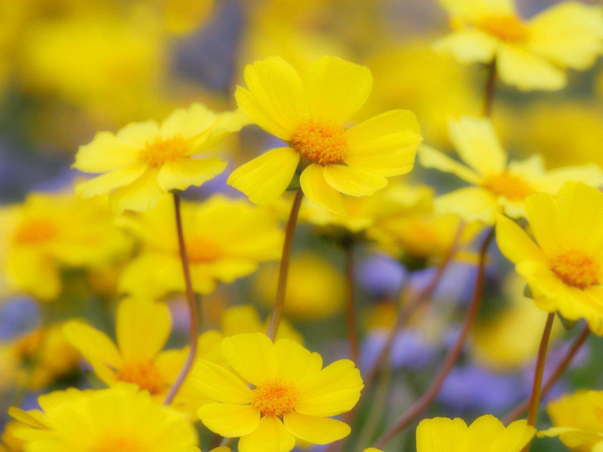 Марта, картинки с желтыми цветами