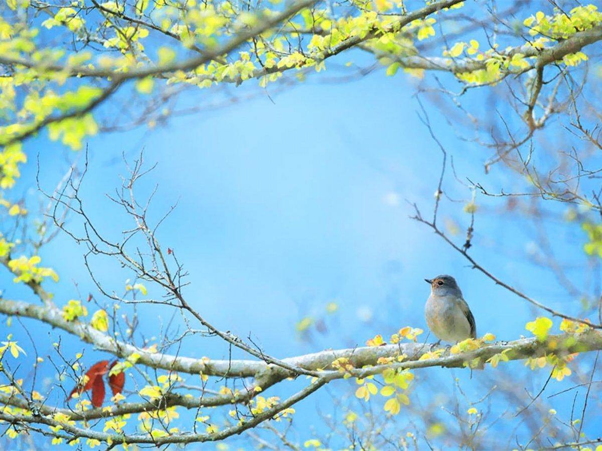 сражения стал картинки весенний лес с птицами нашем сайте