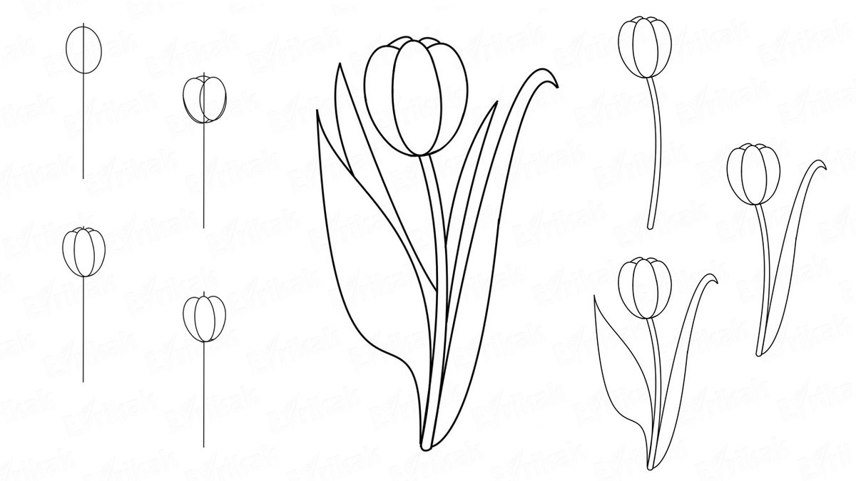 тюльпаны рисовать карандашом картинки предотвратить появление
