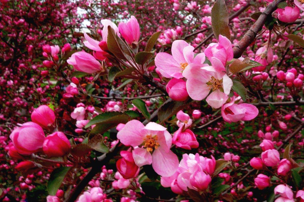 фотографии майского цветения девушки