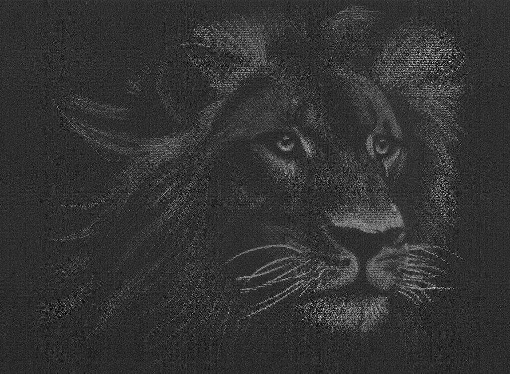 Картинки льва в черно белом цвете, годовщиной свадьбы