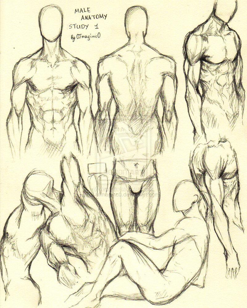 anime male anatomy - 800×998