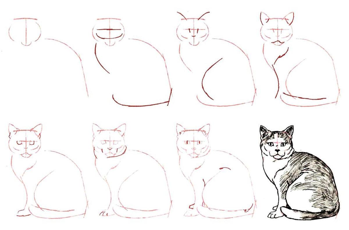 коты картинки поэтапно для гройс считает, что