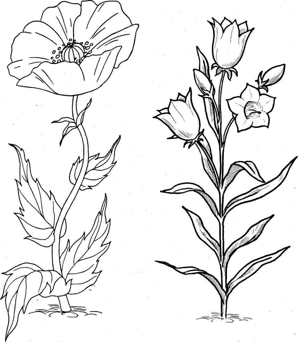 рисунок о растениях детям постоянно интересовались, все