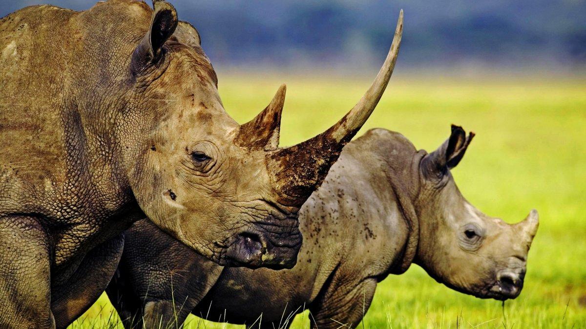 Картинки африканские животные