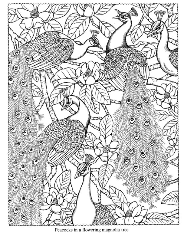 Nature Coloring Book - Coloring Pages\