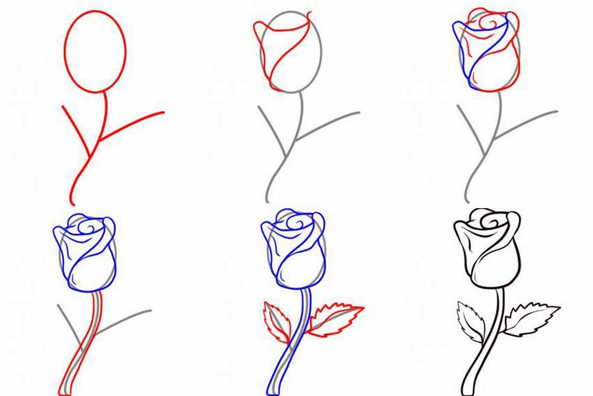 Розы рисунки карандашом поэтапно