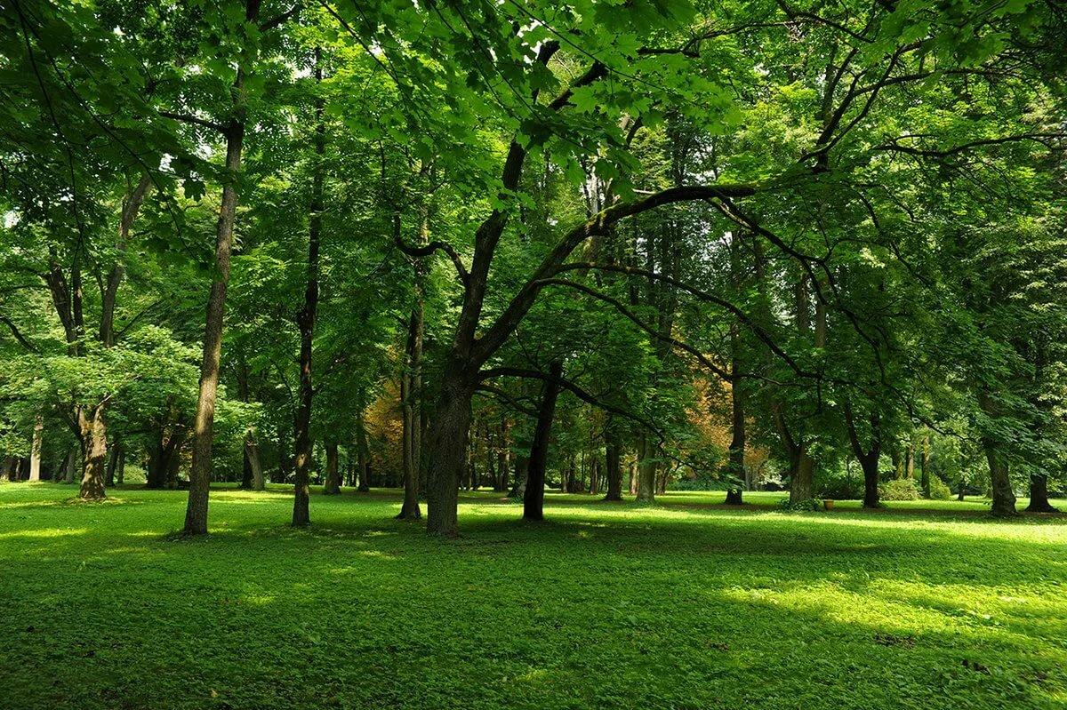Картинки лето парке