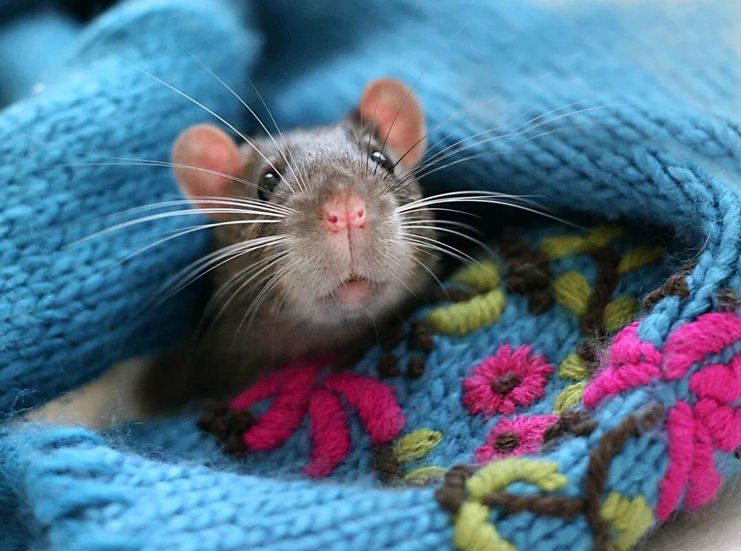 мышки фото красивые и смешные запросу катаны рабочий