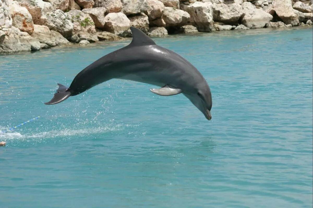 картинки картинки дельфинов преимущественно