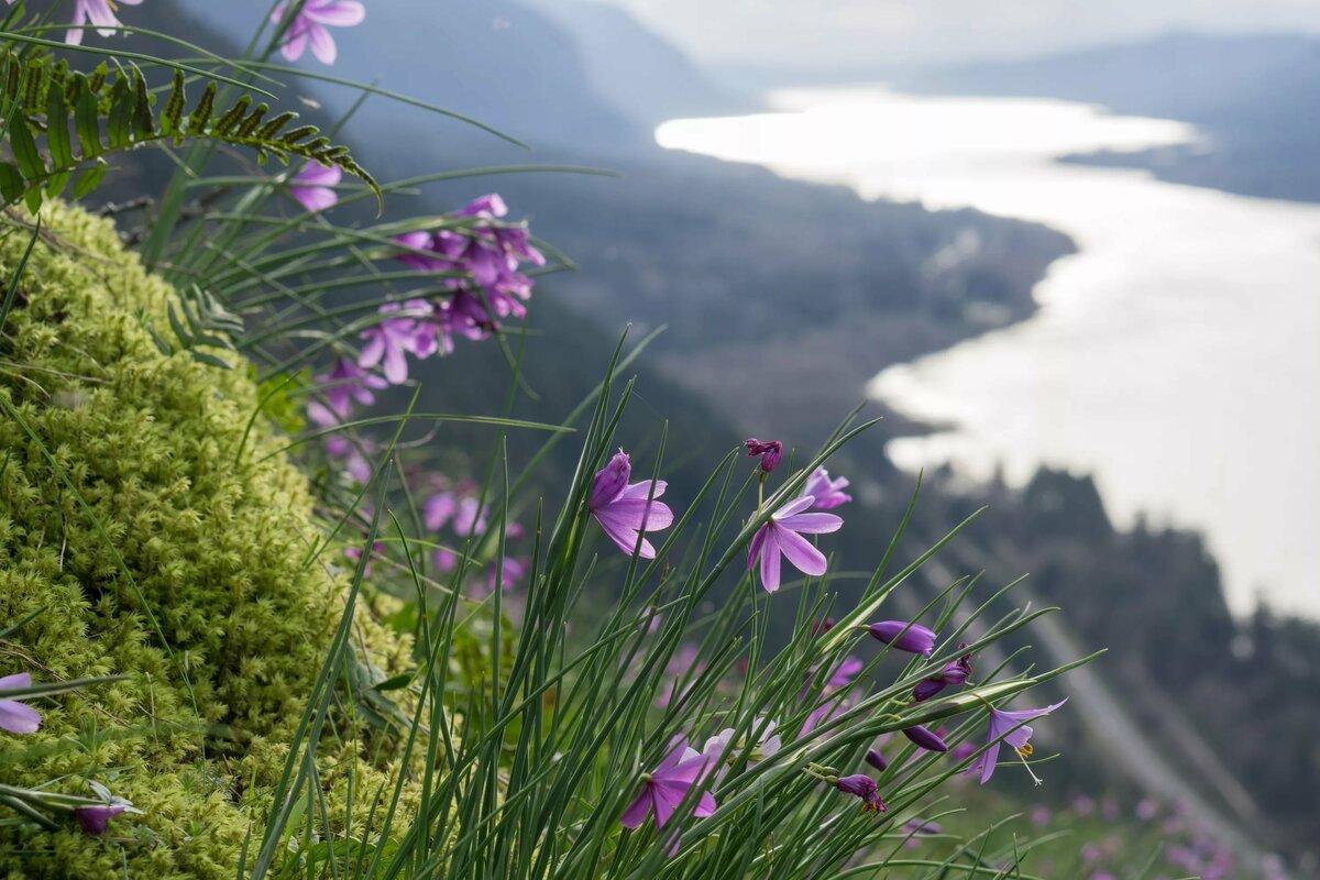 Полевые цветы с белой скалы фото