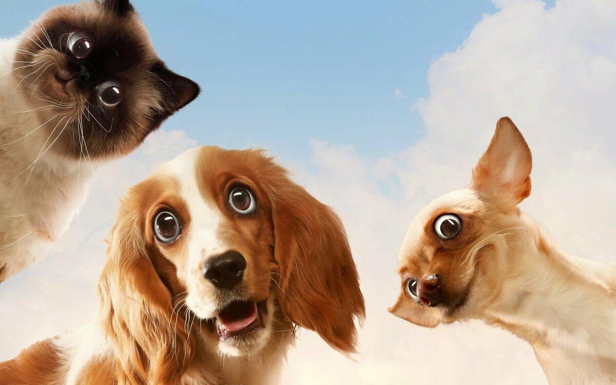 Картинки фон кошки с собаками
