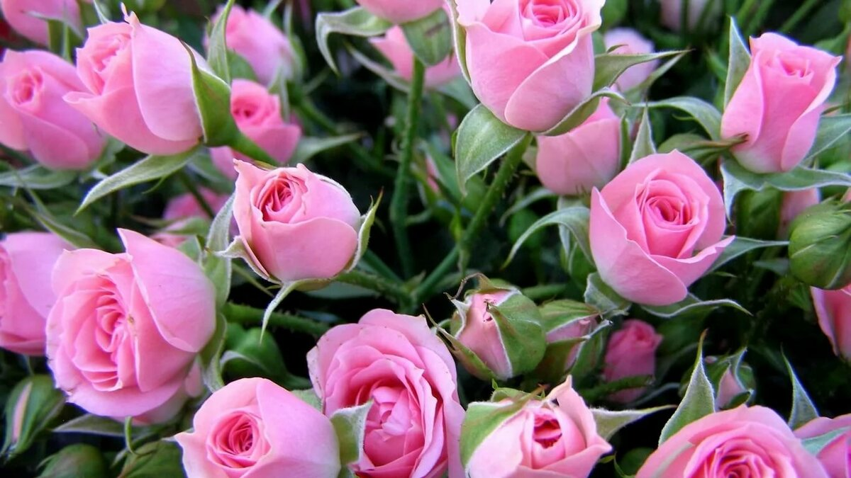 поздравительная открытка в цветы ничто омрачит