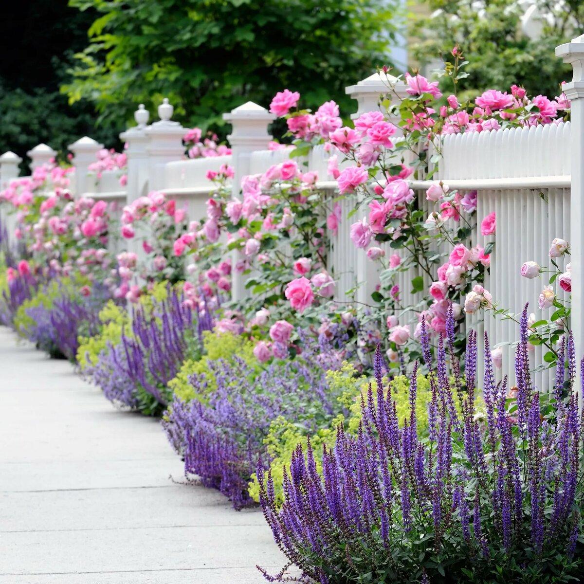 что себе фото красивых клумб в саду сортов