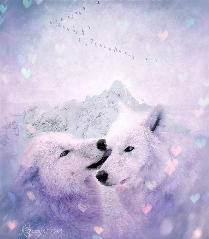 следующем белые волки пара картинки также добавил