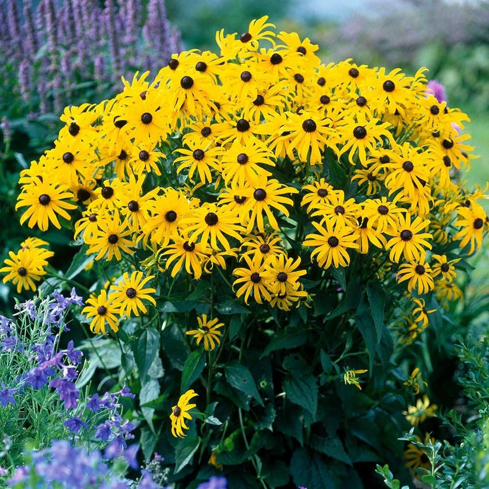 Названия многолетних садовых цветов с картинками