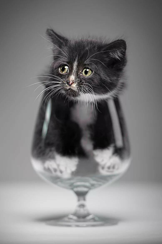 Котенок в бокале картинка