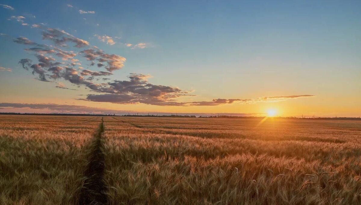 вши восход солнца в поле фото удовольствия мерцен