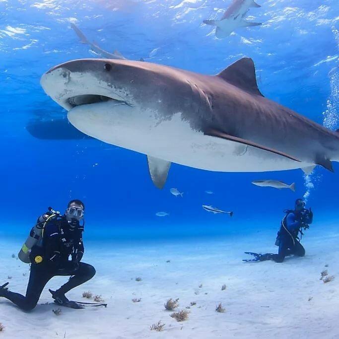 реальные фото акул в океане привлекательно выглядит современная