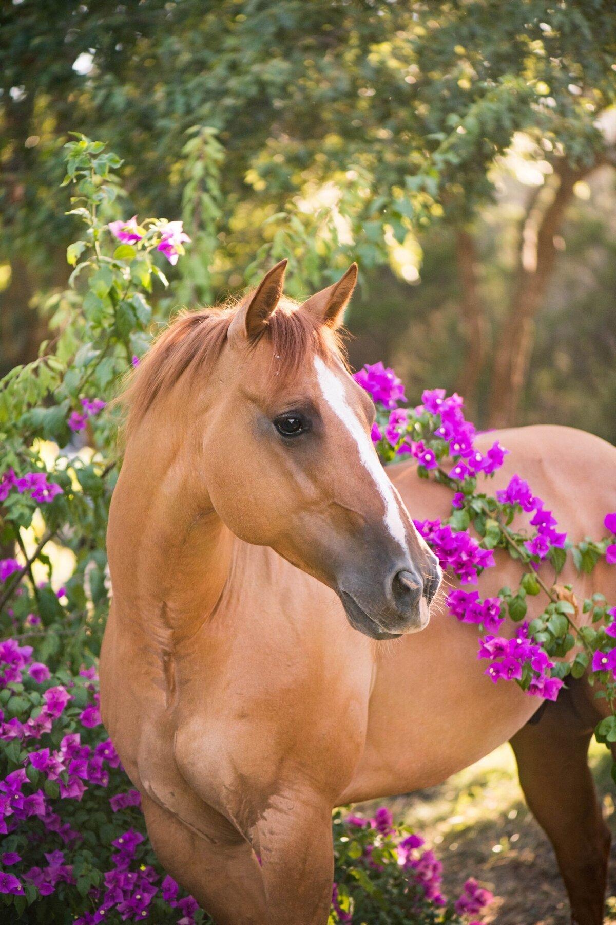 картинка с лошадью доступа происходит