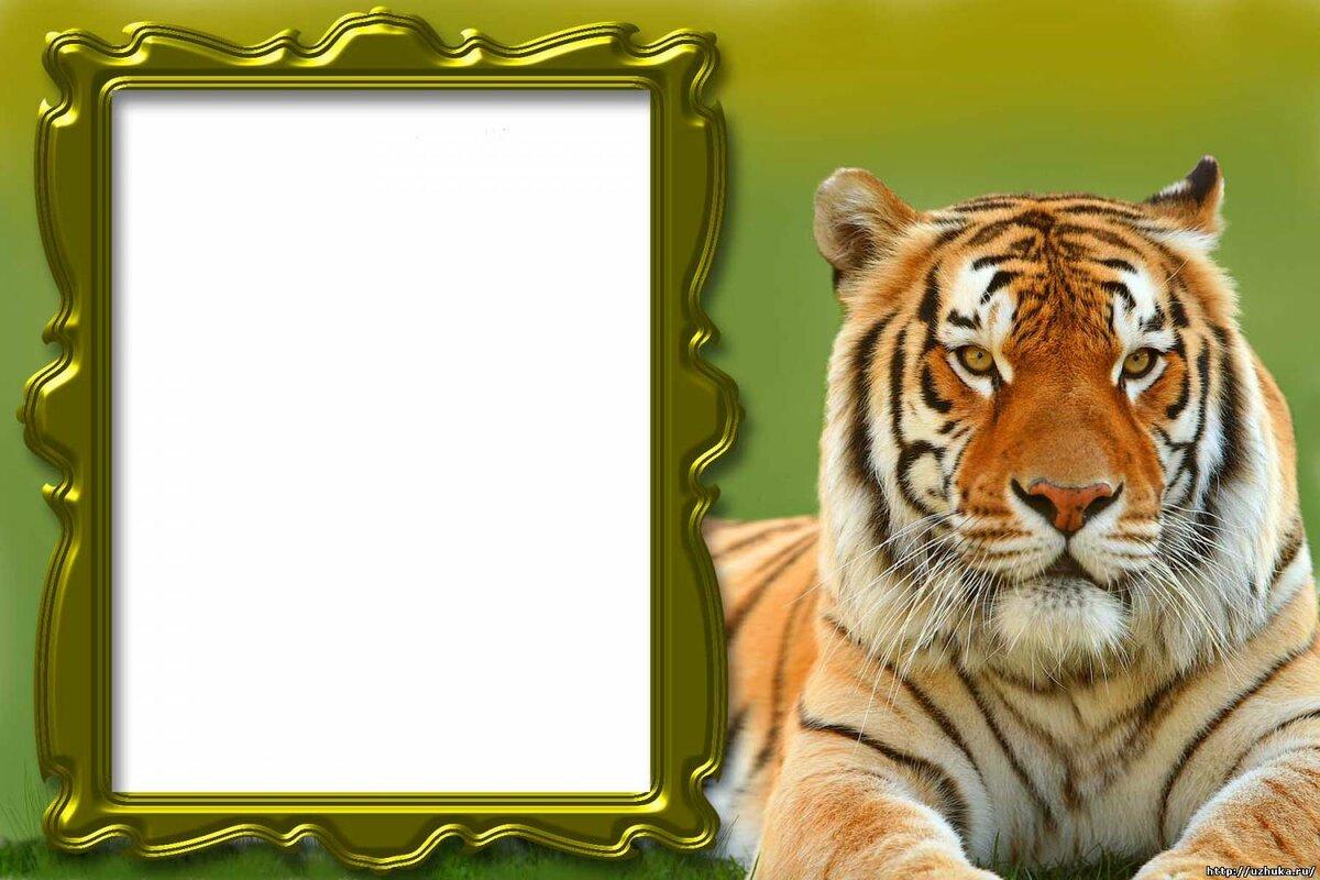 Самые популярные рамки для картинок