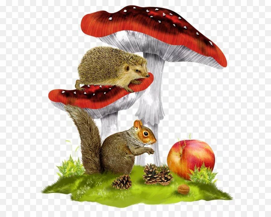 Анимашка ежик с грибами