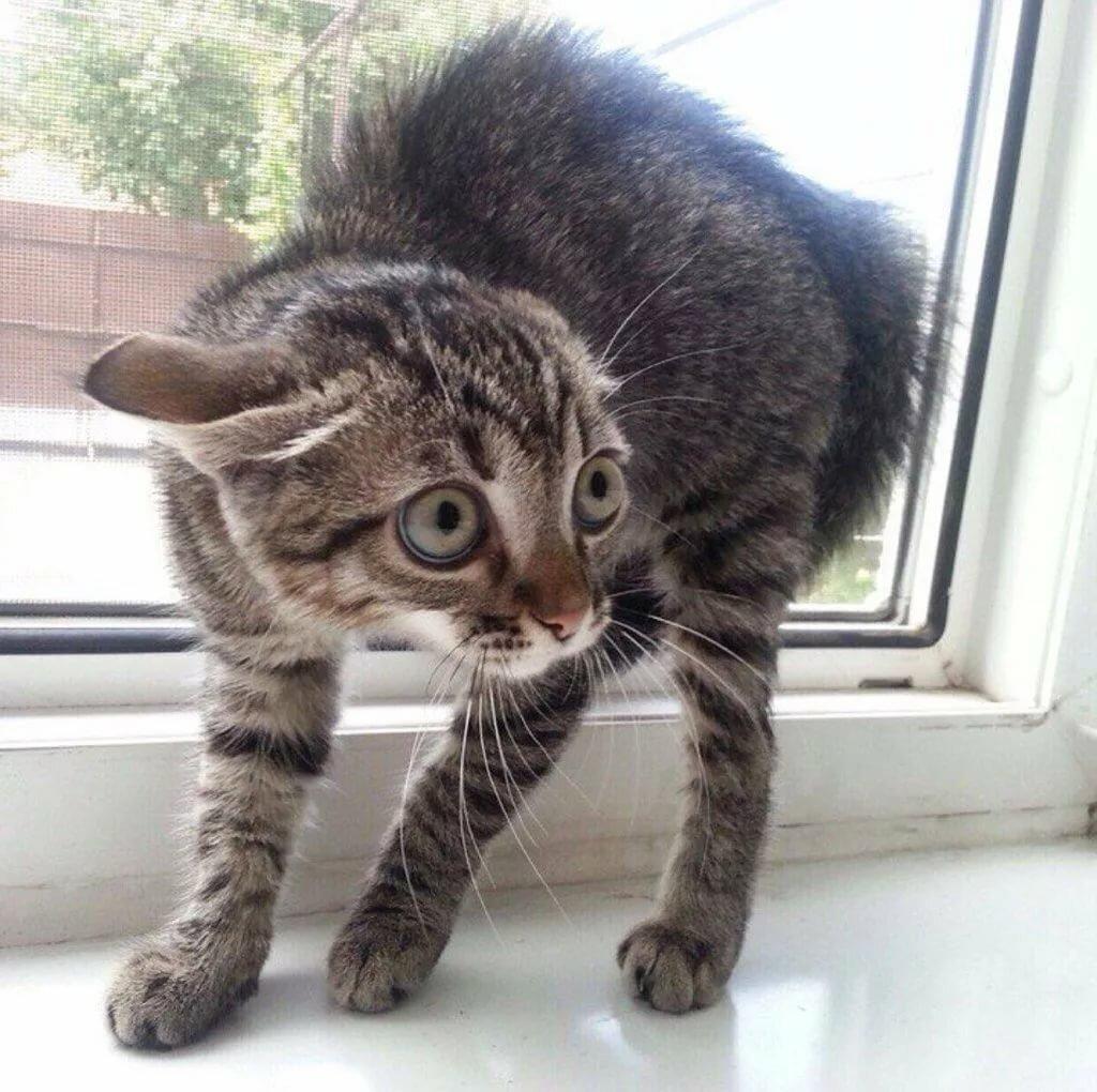 Картинки пугающие кошек