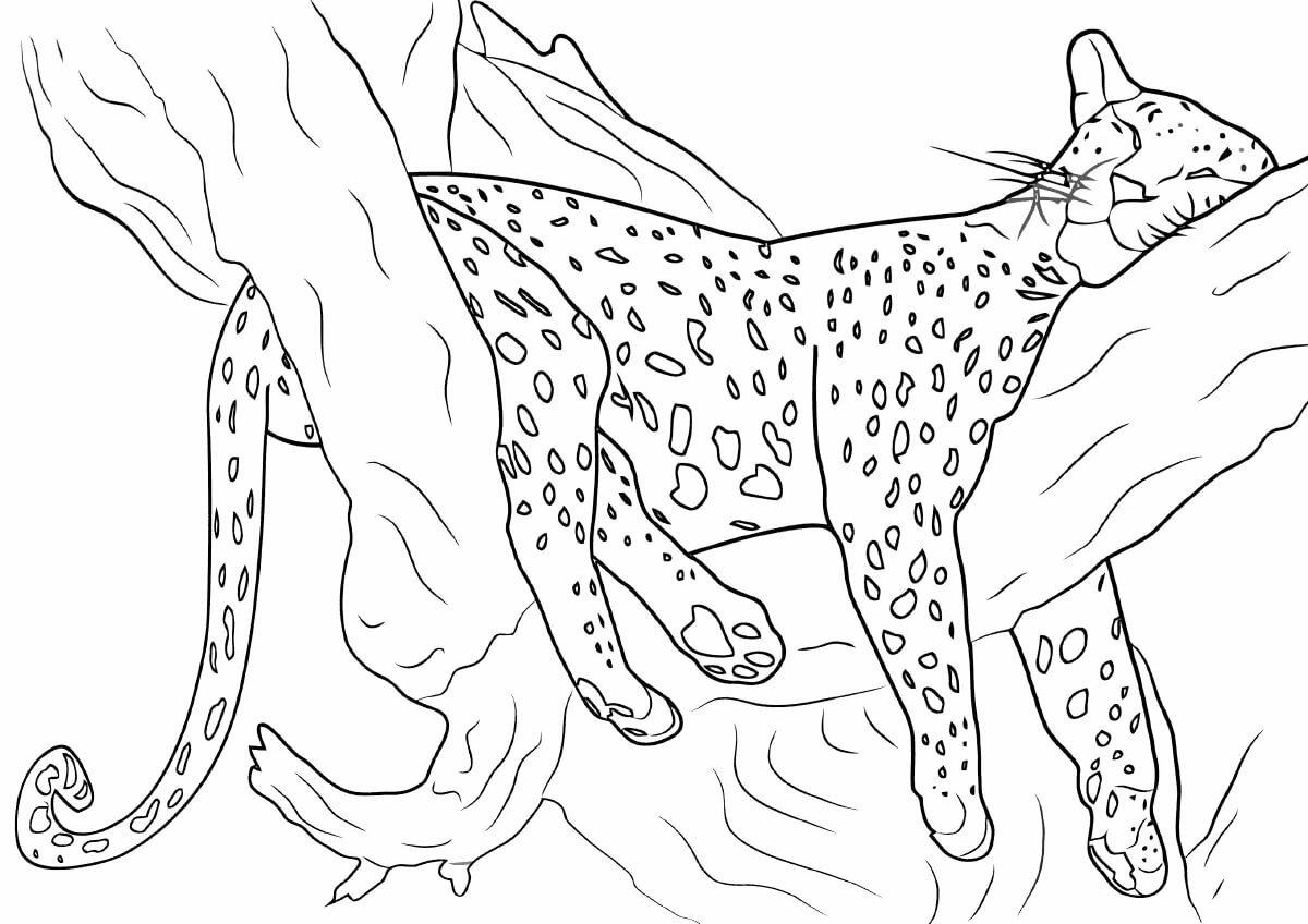 Дикие кошки картинки раскраски