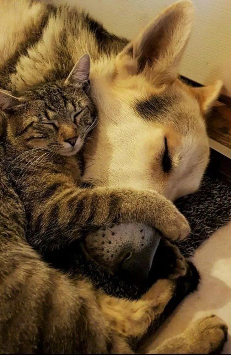 Картинки со спящими кошками и собаками