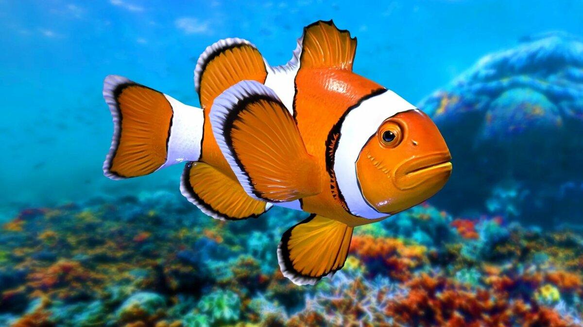 Рыбы фото красивые для детей