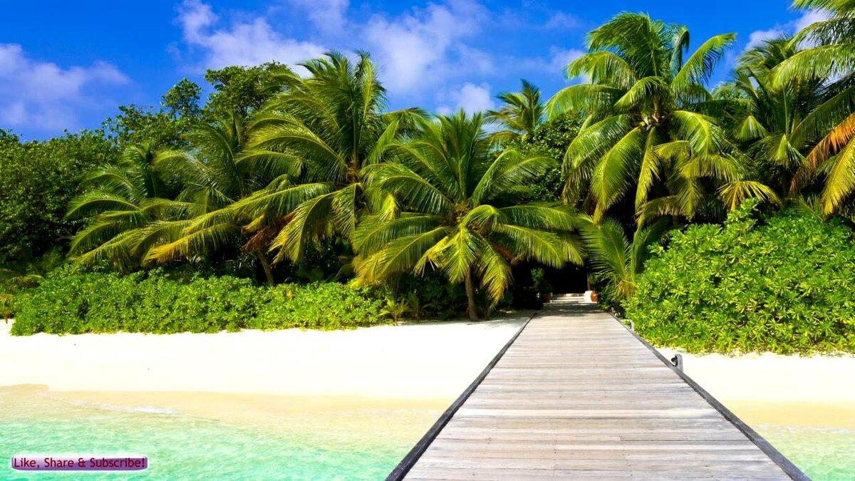 Обои море пальмы
