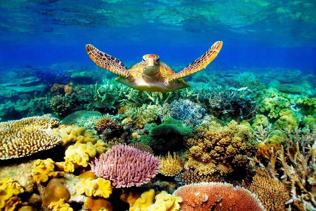 картинки острова фиджи подводный мир