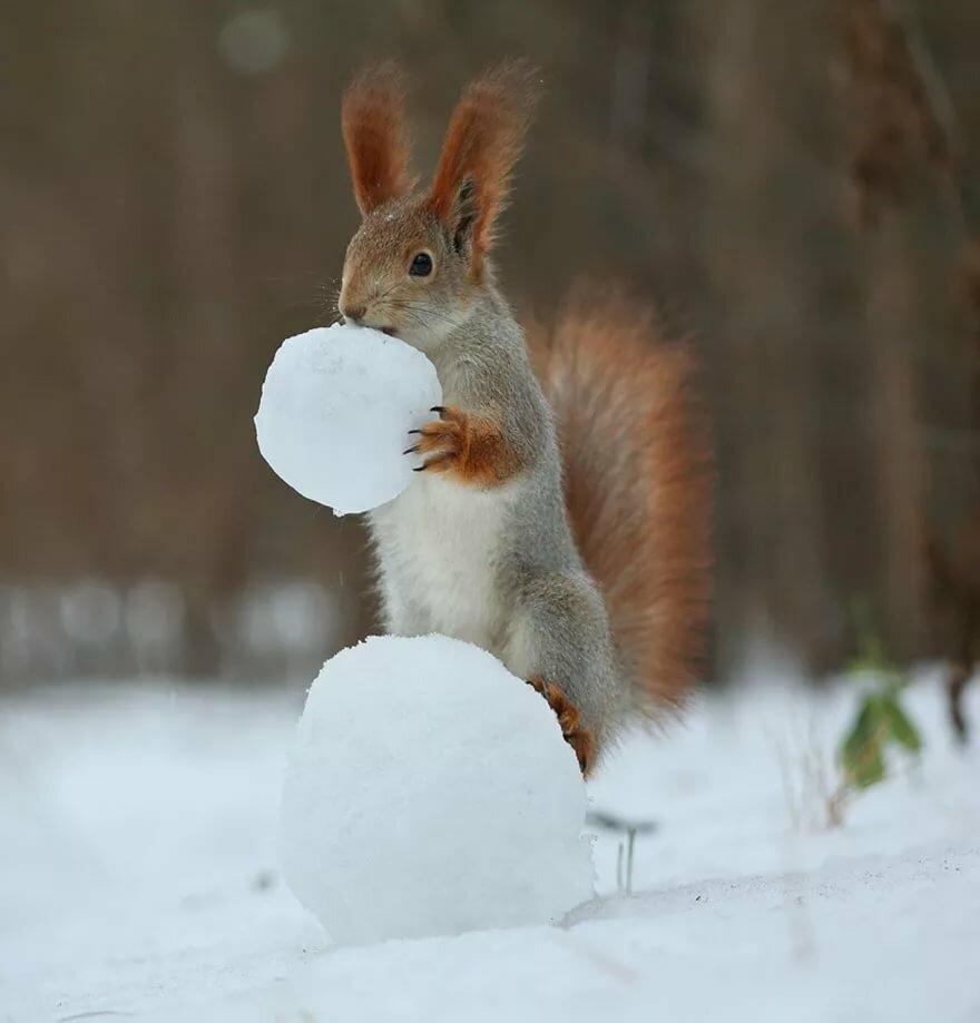 Картинки о зиме смешные