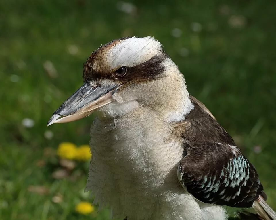 украины картинки смеющихся птиц изнаночной
